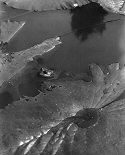 Edward Steichen, Fog on Lily Pad
