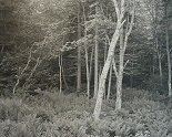 George Tice, Woods, Port Clyde, Maine